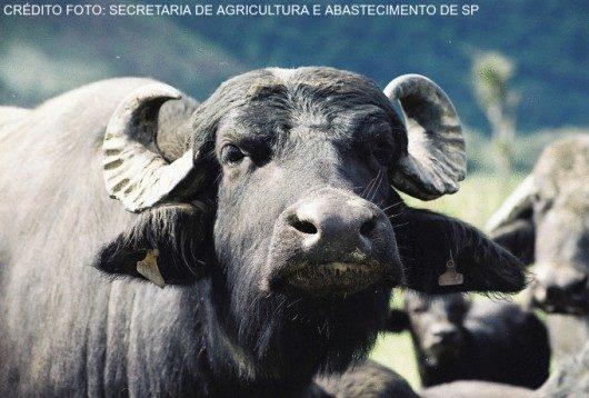 bufalos2 cursos cpt