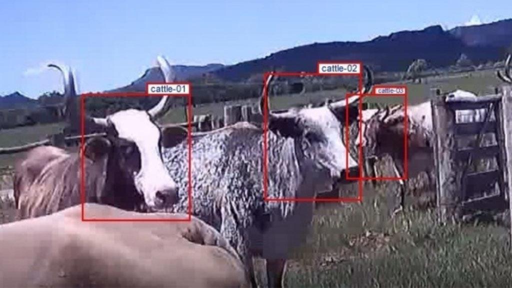 identificacao do gado
