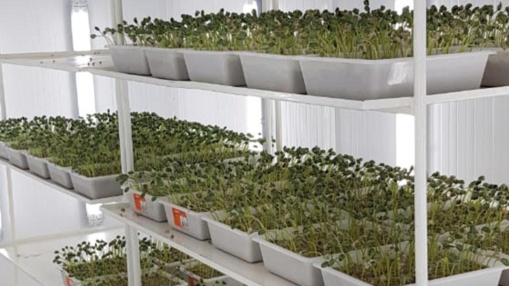laboratorio sementes batavo