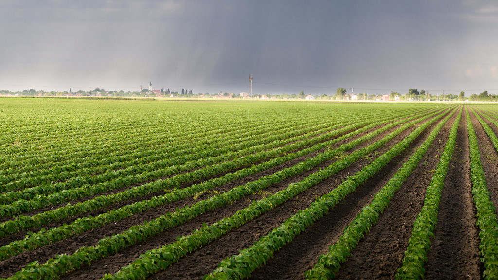 ministra da agricultura acredita na previsao de uma safra recorde este ano