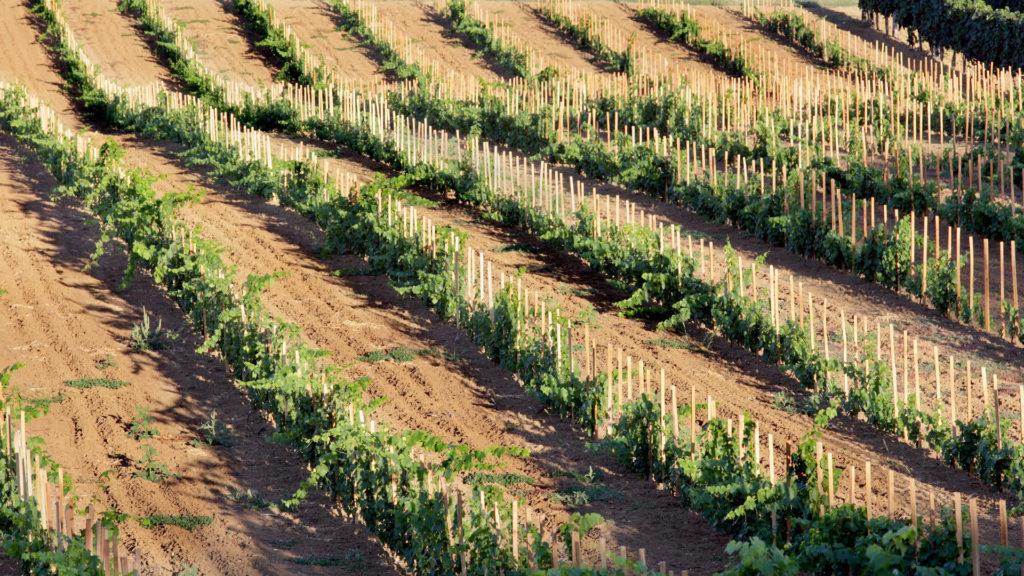 startup traz para o brasil tecnologia inedita de analise genetica do solo