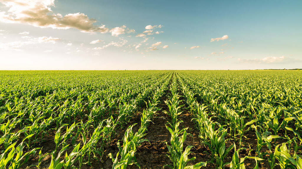 zoneamento de milho