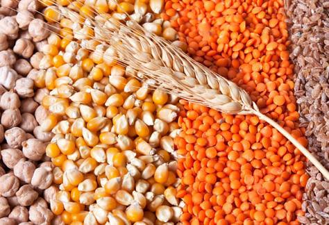 Produção de grãos alcança marca histórica