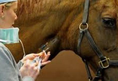 Adapec suspende eventos equestres no Tocantins