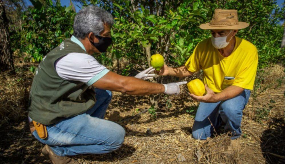 produtores de brumadinho aumentam a producao de alimentos