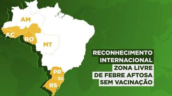 20 do rebanho bovino no brasil livre de febre aftosa sem vacinacao