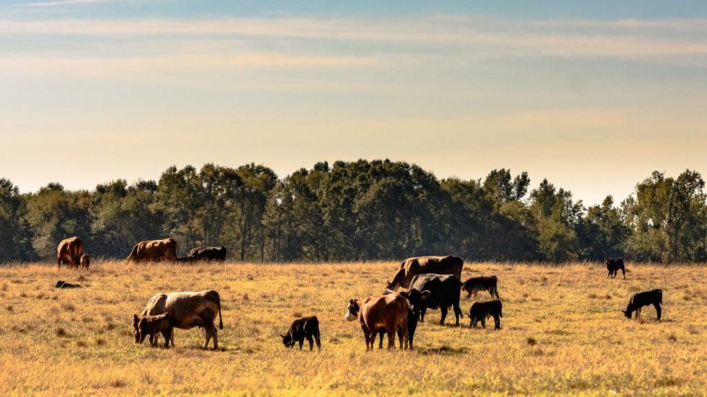 Alternativas de insumos viáveis para suplementação a pasto no período de seca