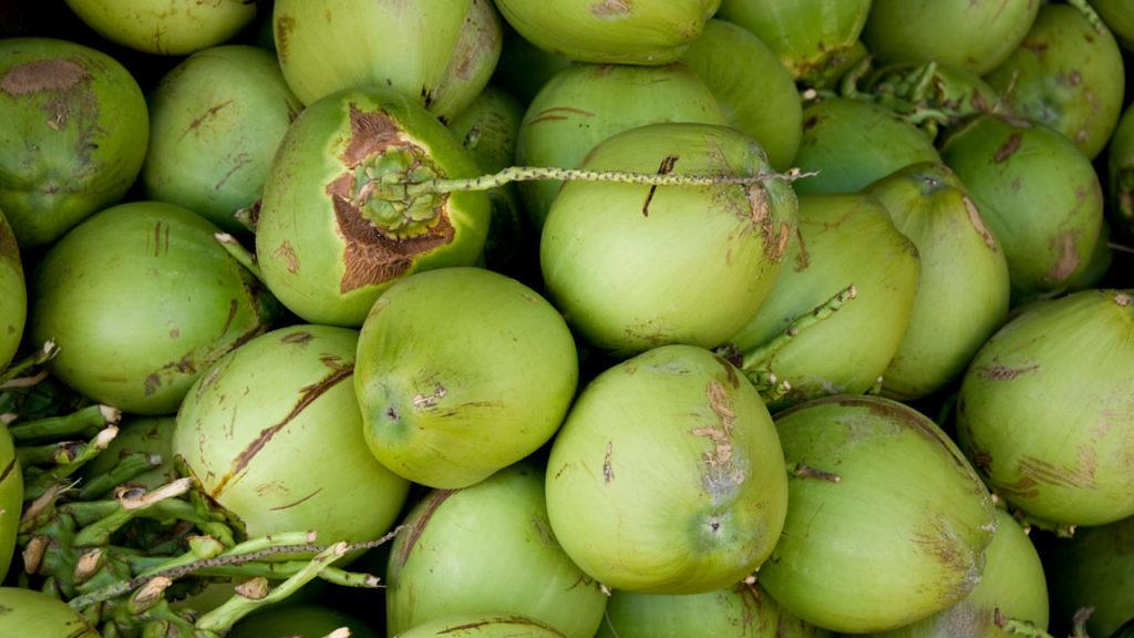 biotecnologia promete transformar a materia da casca de cocos verdes em etanol
