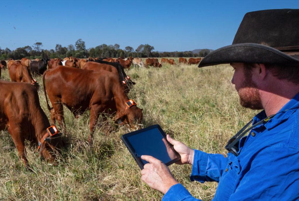 cercas virtuais como tecnologia para aprimorar o manejo e de olho na sustentabilidade