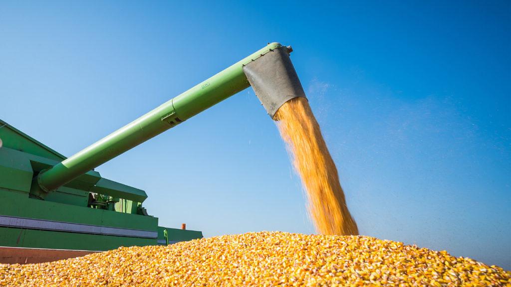 Momento de readequação dos preços do milho