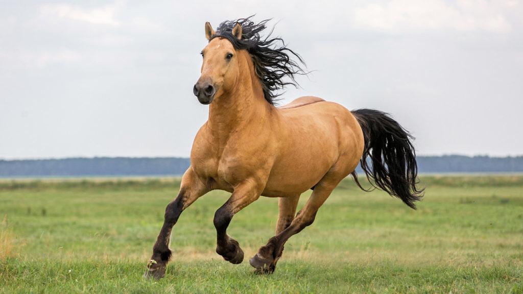 Nutrição básica dos Equinos – Parte 2 – Energia
