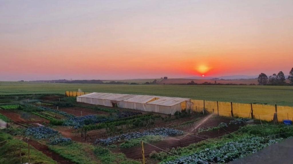 Agricultores se reinventam e encontram novas formas de chegar ao consumidor durante pandemia