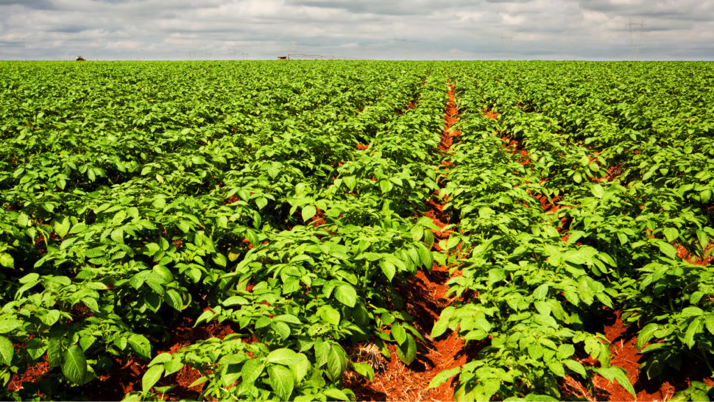 Agronegócio tem mais 6 meses para se adaptar à Lei do Agro