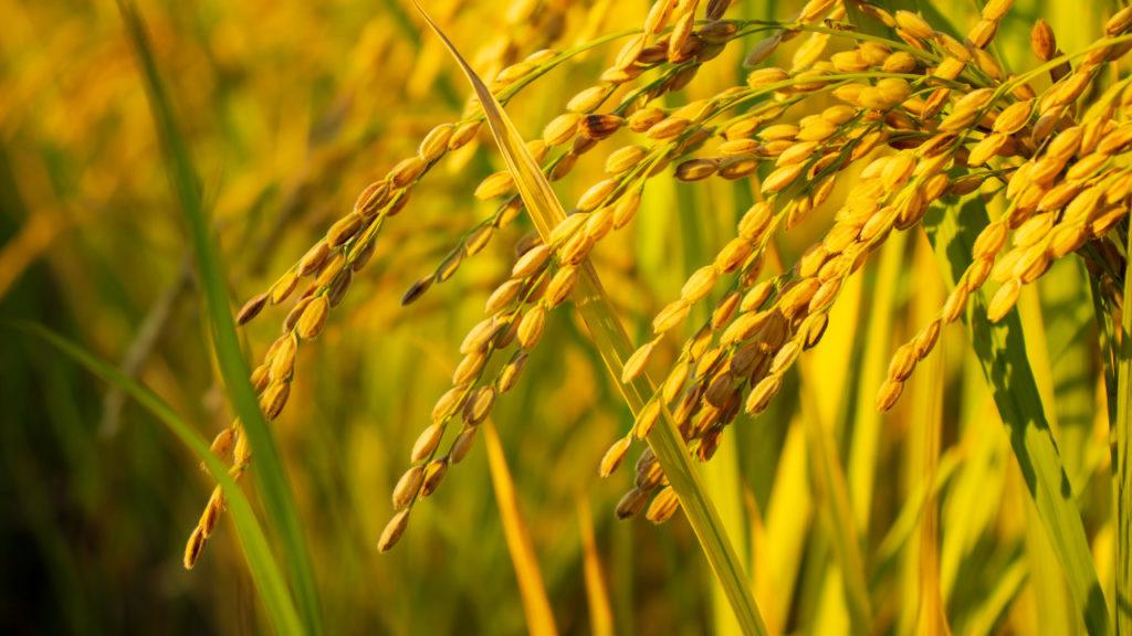 Representantes de entidades rio-grandenses colocam em pauta a abertura do Brasil a novos mercados do arroz agilizando processos logísticos
