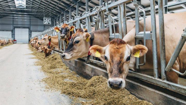 Custos de produção da pecuária de leite sobem 2,89%