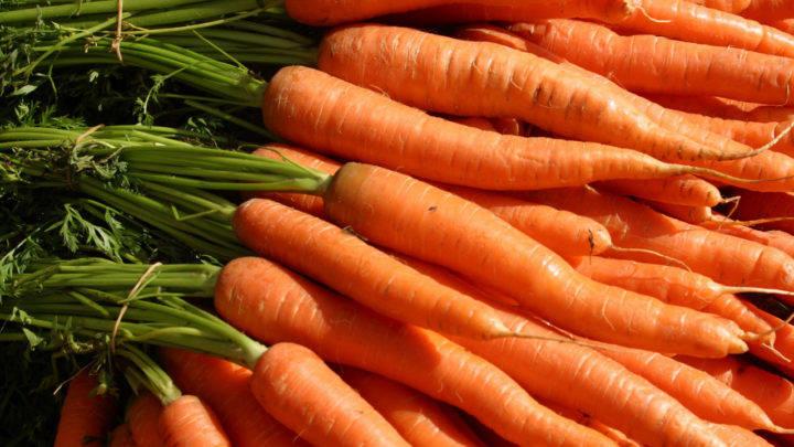 Minas Gerais e Goiás contribuíram para a alta da oferta da cenoura e consequente queda nos preços
