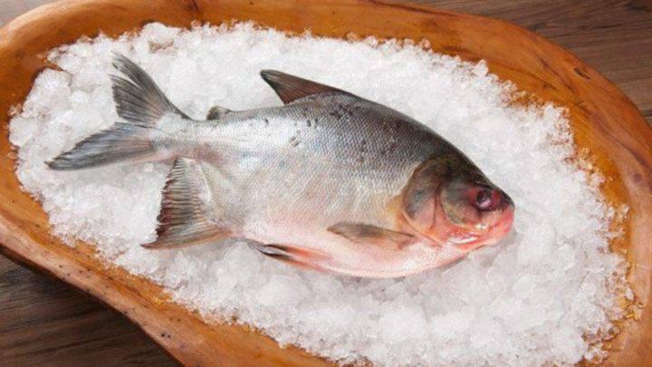 Mapa regulamenta concessão do Selo Arte para pescado