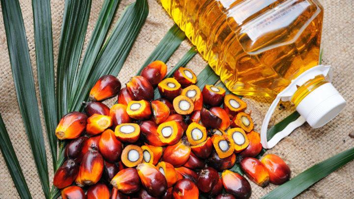 Norte-americana Cargill constrói refinaria de óleo de palma na Indonésia