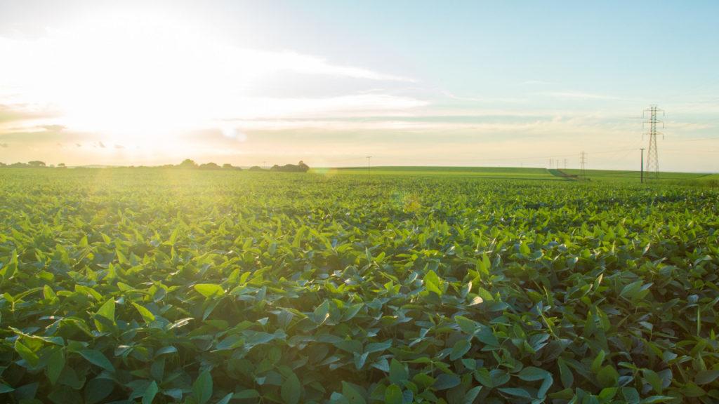Novo regulamento abre mais importações de OGM dos EUA