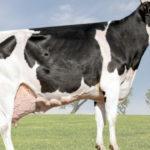Rhoelandt 372 LEDA Doc Stormatic alcançou pico de 190.107,92 kg de leite