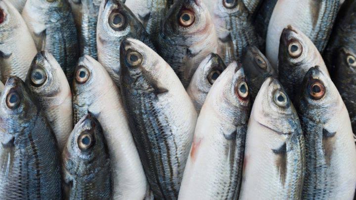 Secretaria de Agricultura de SP realiza webinar Pescado é Saúde