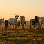 Suplementação adequada no período de seca é capaz de garantir a rentabilidade da produção pecuária