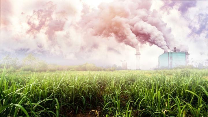 Açúcar sobe e etanol hidratado recua no mercado paulista