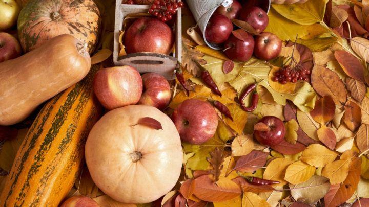 Comercialização de frutas, castanhas e verduras nativas do Brasil