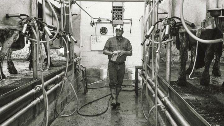 Solução inteligente para monitoramento de vacas de leite