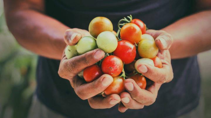 Conab, Mapa e FNDE firmam acordo de cooperação técnica para fortalecimento da agricultura familiar