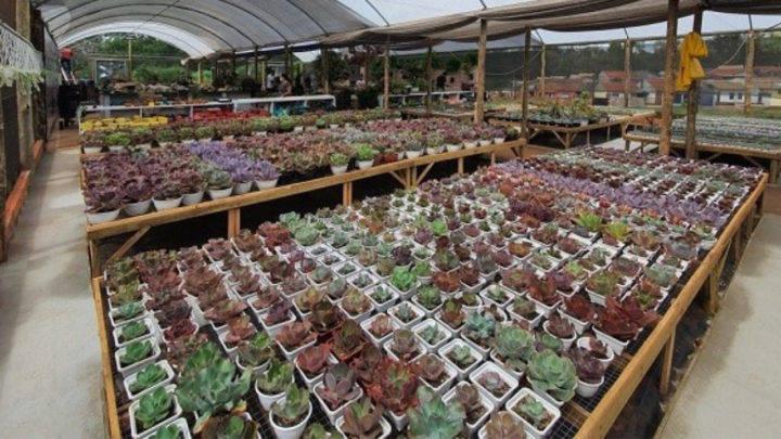 cultivo de plantas ornamentais gera empregos em cianorte 1 1