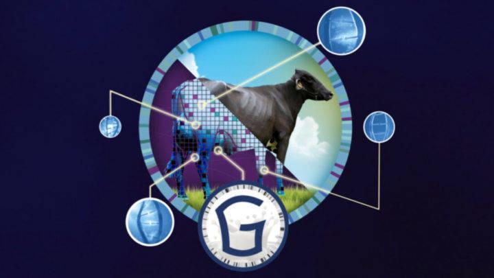 Encontro Virtual da Raça Girolando começa hoje e reúne pecuaristas de toda América Latina