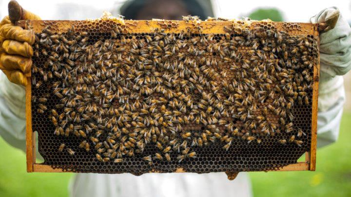 Indígenas aprofundam conhecimentos para desenvolver apicultura em aldeias