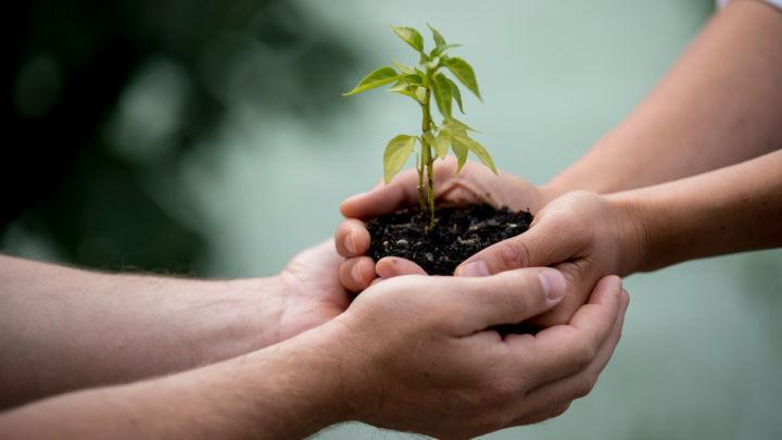 Mais da metade do que é gerado pelo agro é proveniente do cooperativismo
