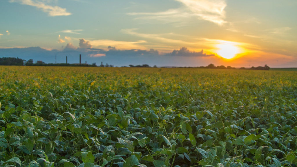 Manejo digital de pragas da soja pode gerar economia de R$ 81ha