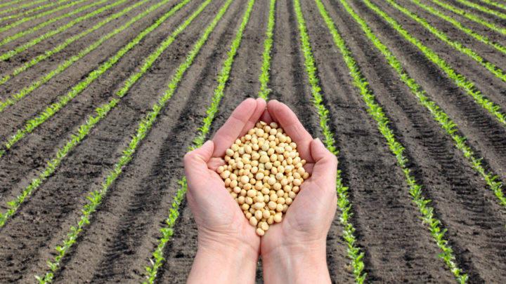 Novos dados de comercialização da soja
