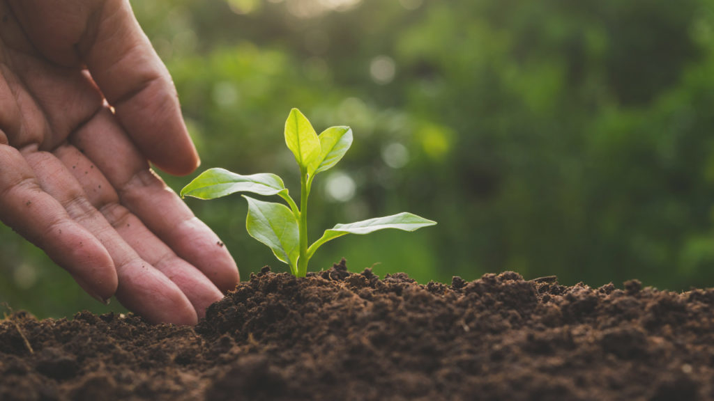 Óxido de magnésio corrige em uma única aplicação a deficiência do elemento no solo, garante especialista