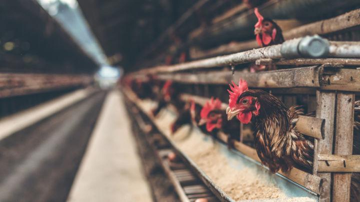 Pif Paf Alimentos informa sobre aquisição da Uniaves