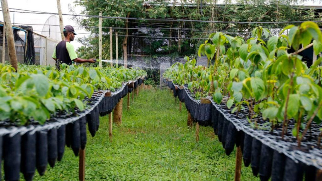 Renovando viveiros de mudas nativas na região do Alto Rio Doce