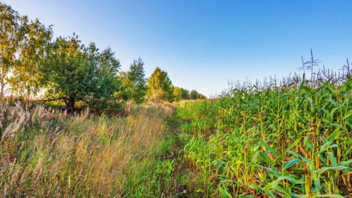 Uso de forrageiras superiores são alternativa para mitigar baixa disponibilidade no período seco