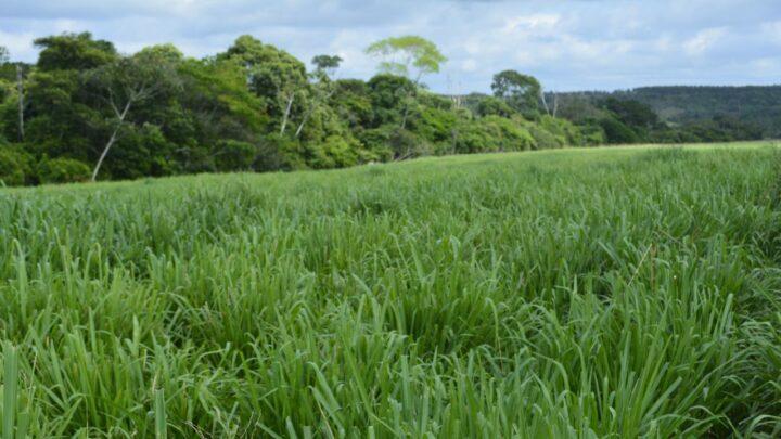 A floresta protegida é coisa do presente (2)