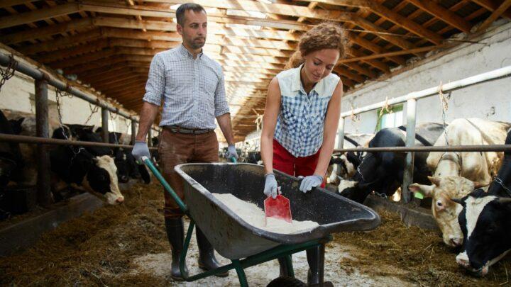 Aditivos na nutrição promove melhor desempenho animal