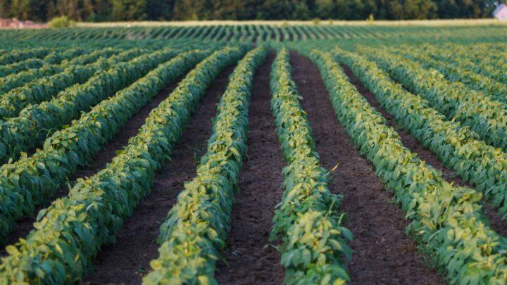 Agro tecnificado impulsiona PIB de cidades mato grossenses