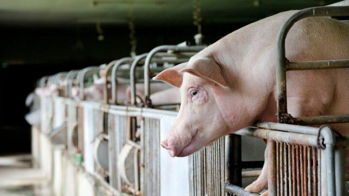Chineses importam menos 14,43% em carnes no mês de julho