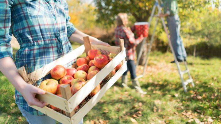 Consórcio Rotacionado para Inovação na Agricultura Familiar