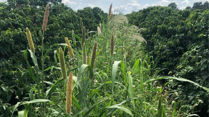 Cresce demanda por tecnologias para um uso sustentável do solo