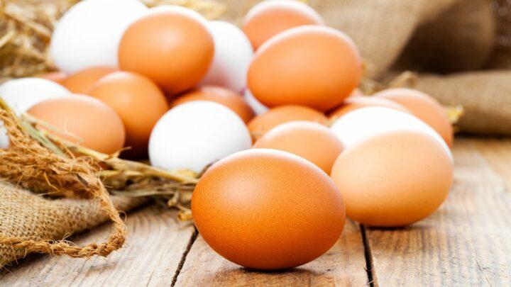Liquidez dos ovos equilíbrio entre oferta e demanda estabiliza preços