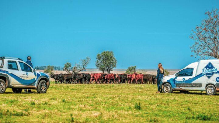 O papel da indústria no extensionismo rural