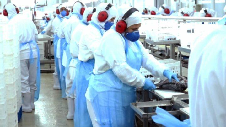 Piscicultura exporta 158% mais em junho