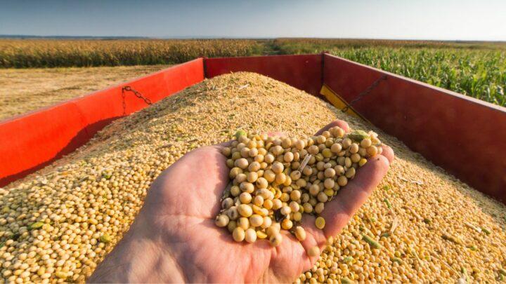 Produção brasileira de grãos no ano safra 20202021